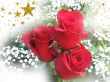 Joyeuse fête de la Sainte-Trinité de DIEU à tous!! Roses_10