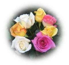 Joyeuse fête de la Sainte-Trinité de DIEU à tous!! Roses_11