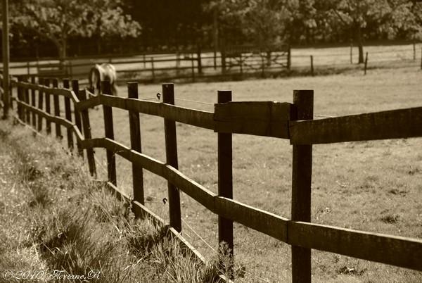 """Photographies équestres """" Ajouts de photos le 13.10.2010 Copie_17"""