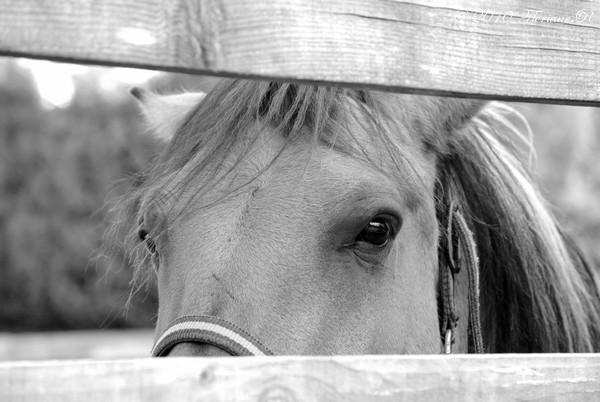 """Photographies équestres """" Ajouts de photos le 13.10.2010 Eyes11"""