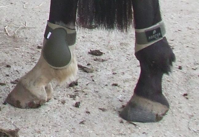 Vend Guetre+PB norton Kaki/beige taille poney, neuf Pb10