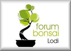 Forum Bonsai