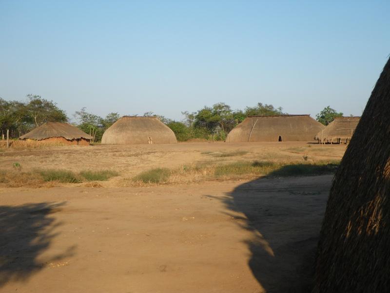 amazoni Imgp2911