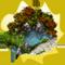 الزهور ونباتات الزينة