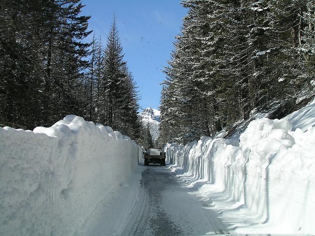 Le leggendarie nevicate del Mount Rainier 24036610