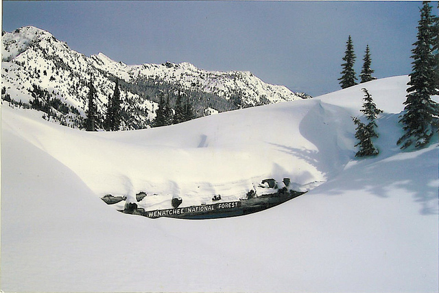 Le leggendarie nevicate del Mount Rainier 45418110