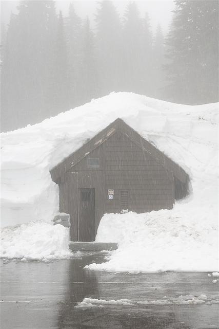 Le leggendarie nevicate del Mount Rainier 46493410
