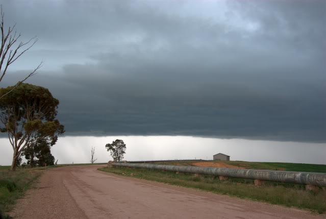 Primavera Australiana Imgp6311