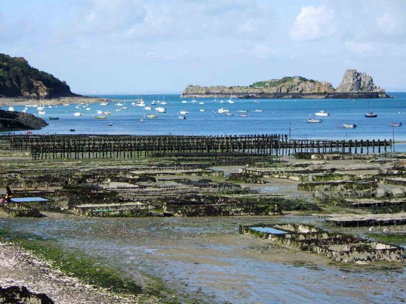 Ille et Vilaine : Cancale, perle de la Bretagne nord Cancal15