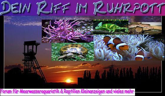 Dein Riff im Ruhrpott  IST WIEDER AKTIV!!!!Jetzt noch mit REPTILIEN!!!!!!!