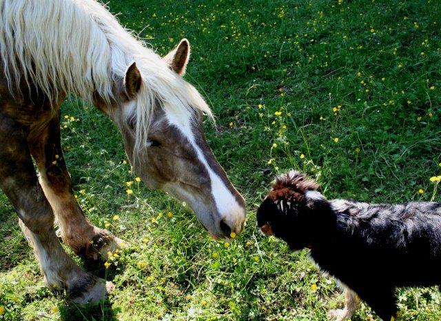 Thème de Juin : Le Mois des Copains (copains non équins et non humains!!!) Crunch11
