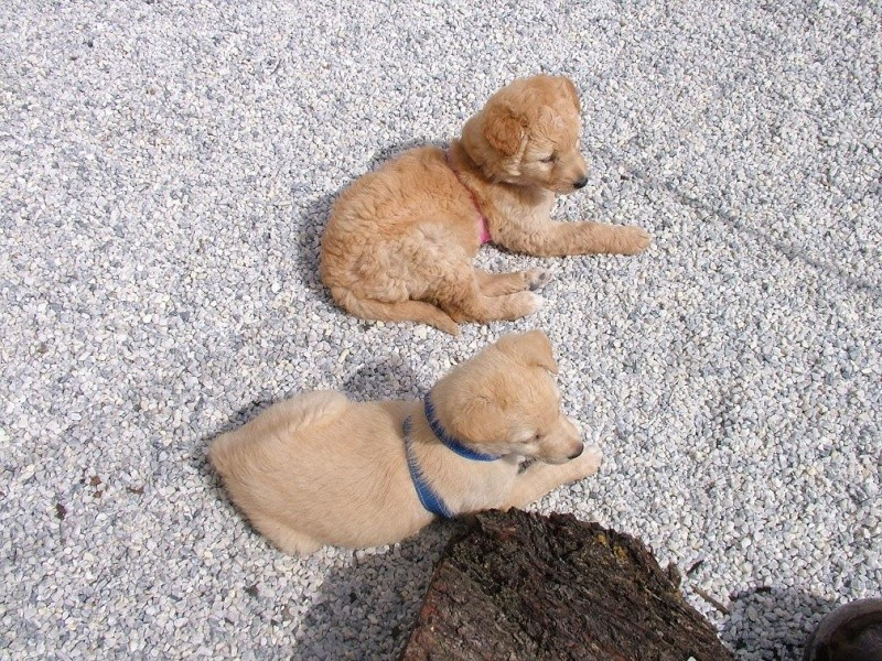 Abandoned Puppies. Puppie10