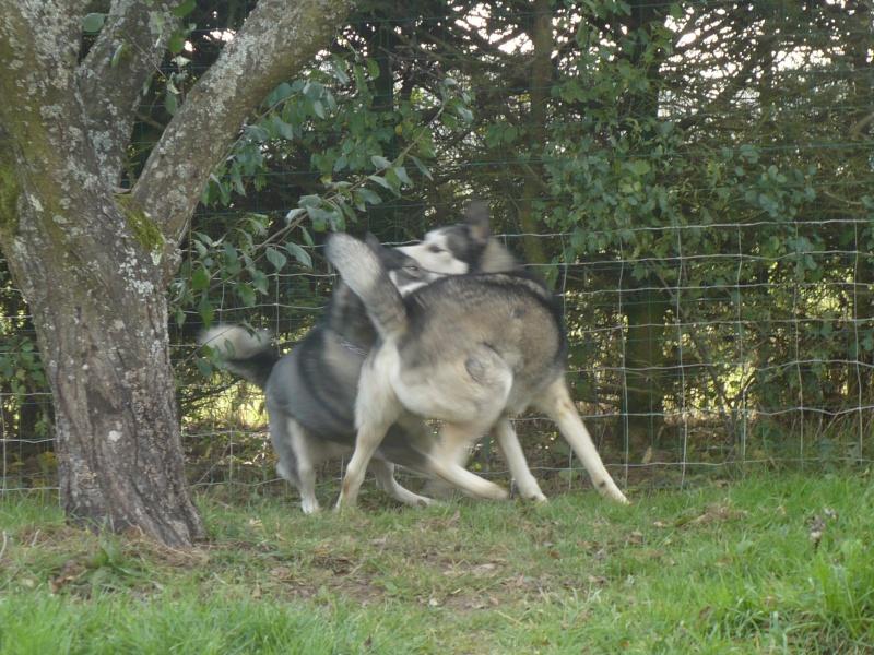 Testez vos connaissances sur les comportements et attitudes des chiens P1070311