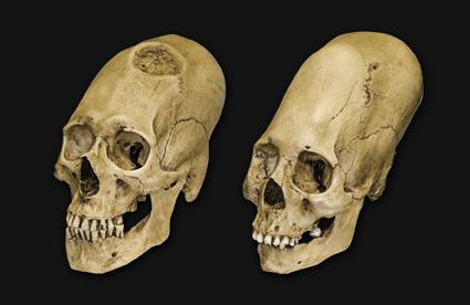 Etude sur prise de tête de nos ancêtres Cranes11