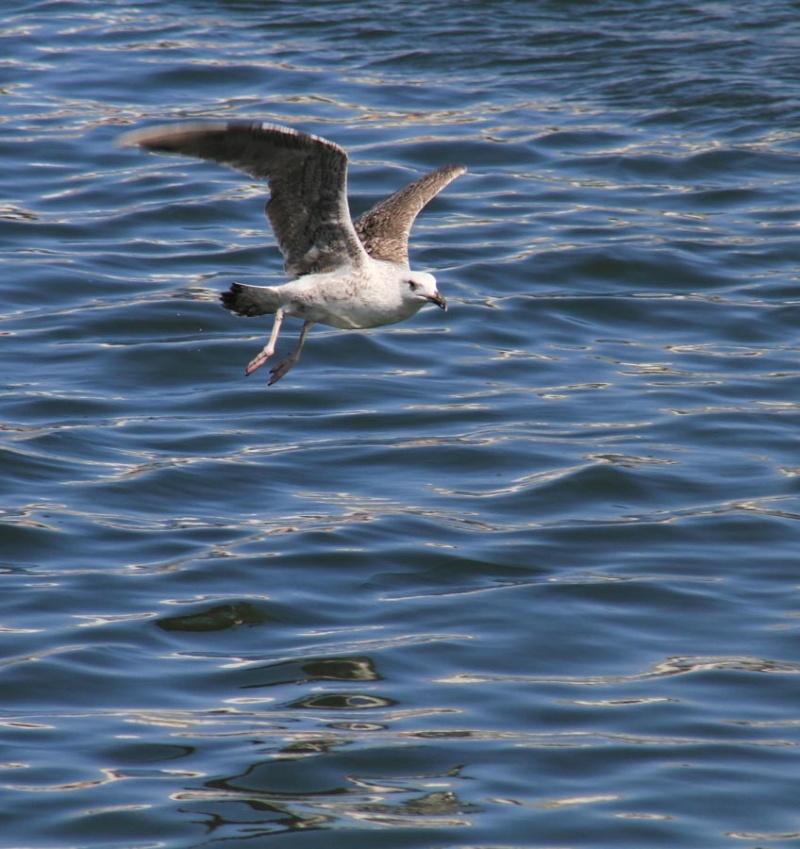 Concours du mois de septembre 2010. Thème : L'oiseau Img_5914