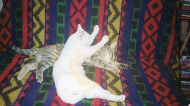 Spécials Photos : Avant/Après de nos chats - Page 3 Img01911