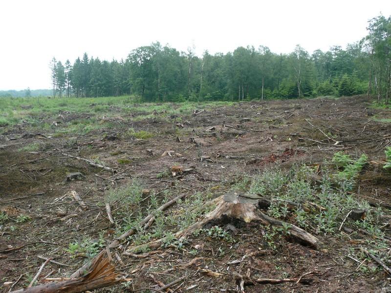 [Malaxis des marais] En danger critique d'extinction! P1000912