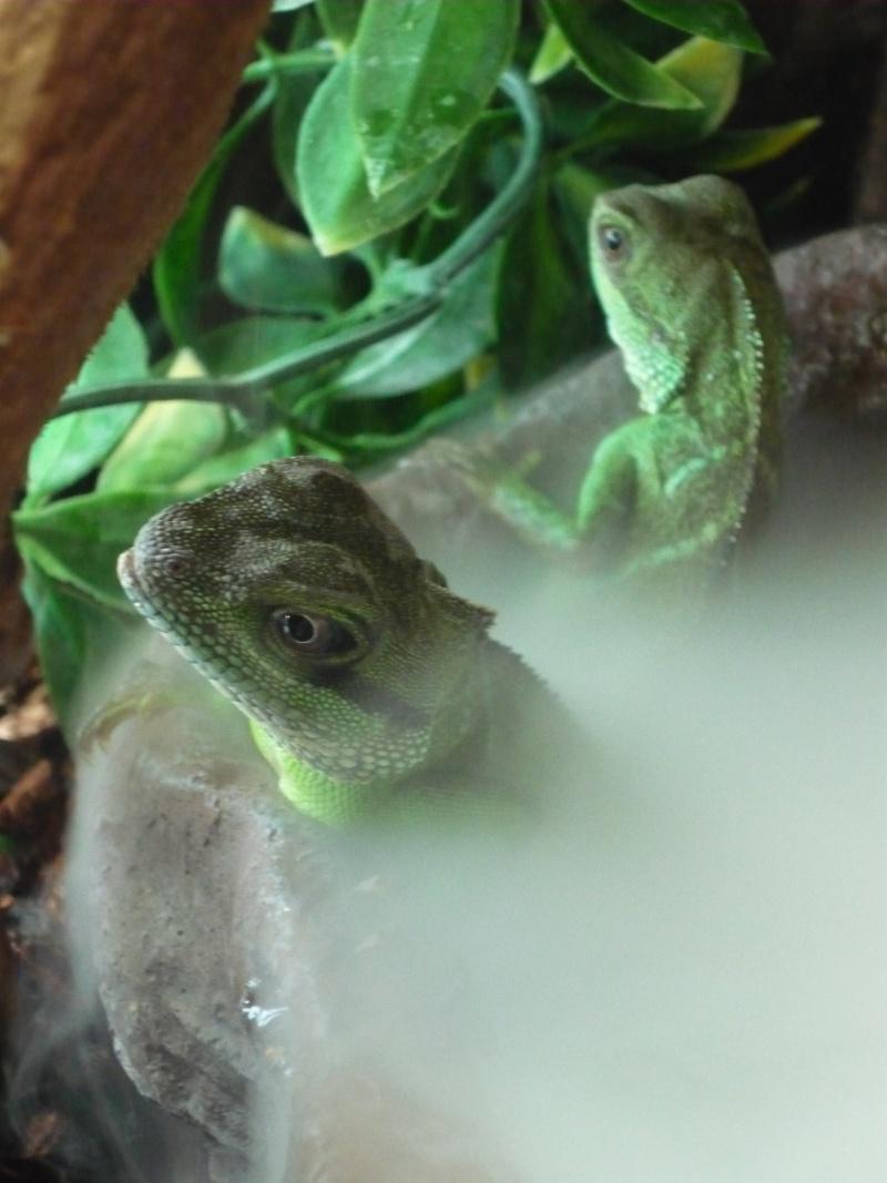 Mon dragon d'eau a peur de l'eau :( P1010810