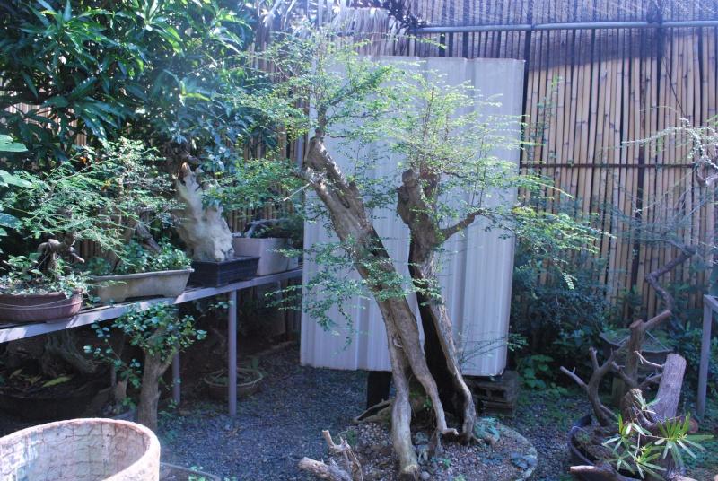 my nursery today. Dsc_0930