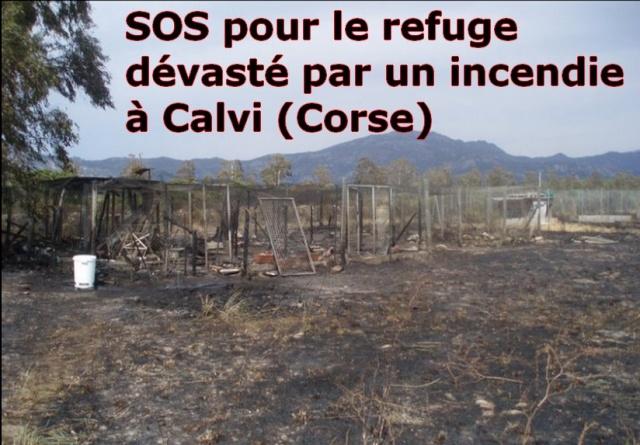 Espagne : Une nouvel acte de vandalisme dans un refuge ! 24315210
