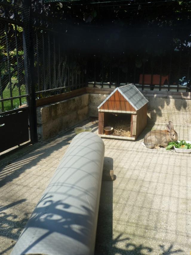 Habitat extérieur P1090211