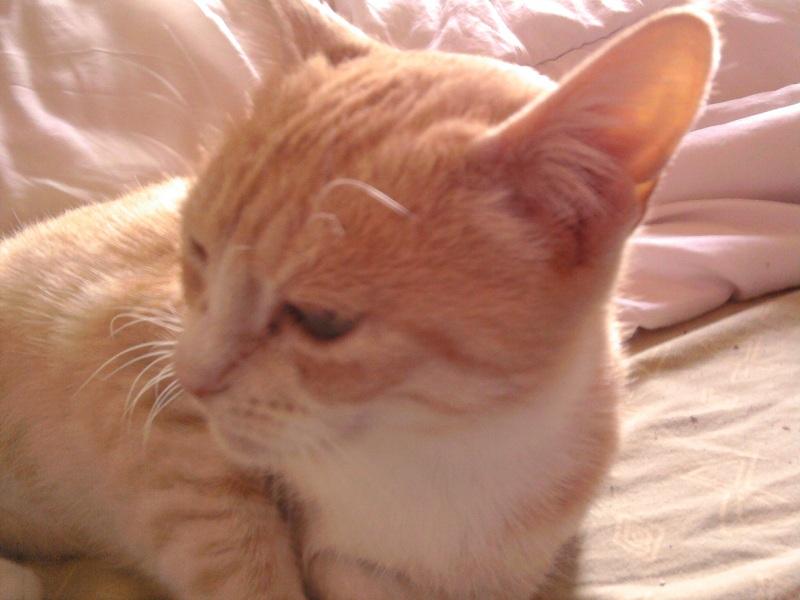 Caline,  née le 1/01/1996, identifiée HPB743 Photo021