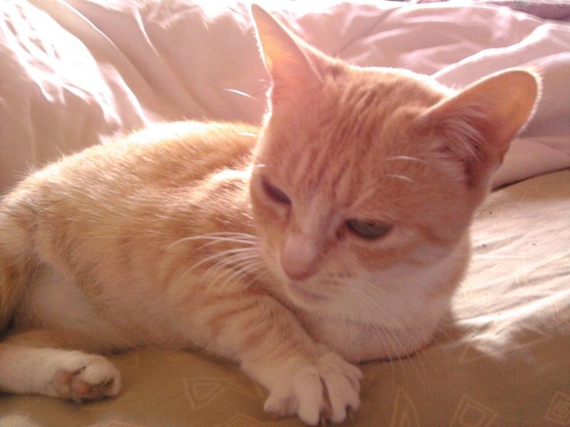 Caline,  née le 1/01/1996, identifiée HPB743 Photo022