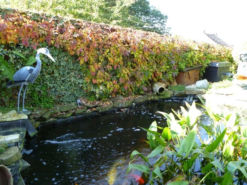 premières couleurs d' automne... P1000516