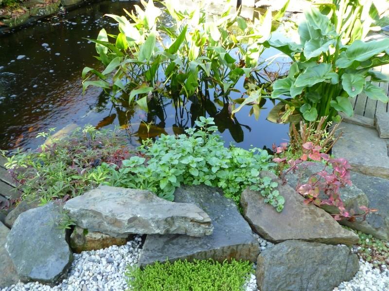 premières couleurs d' automne... P1000517