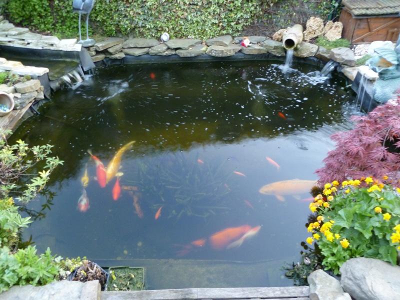 petite soirée photos au jardin... P1010017