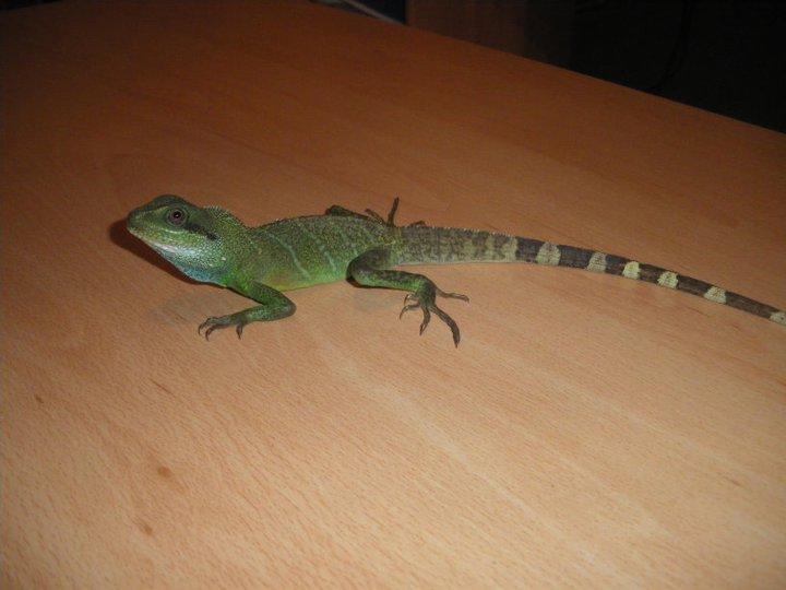 Mon dragon d'eau 18423210