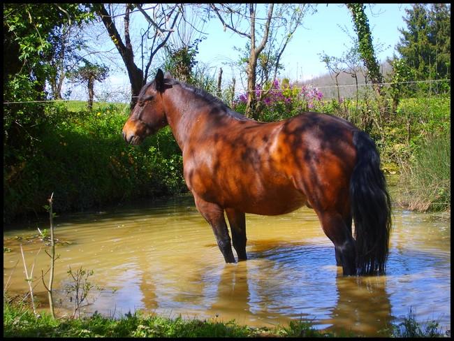 Les chevaux et l'eau, venez votez... S6000110