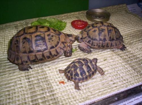 identification des tortue  110