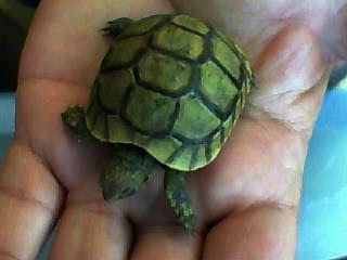 identification des tortue  211