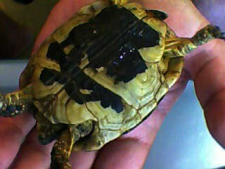 identification des tortue  311