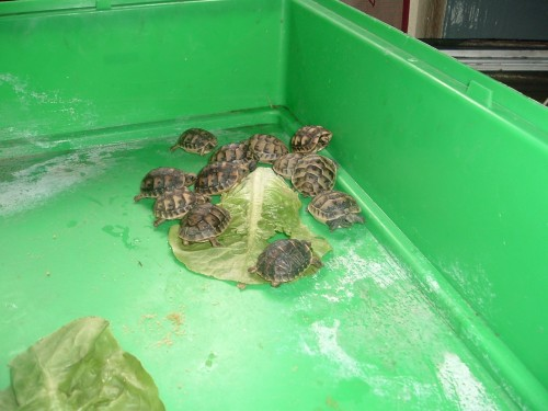 identification des tortue  3_110