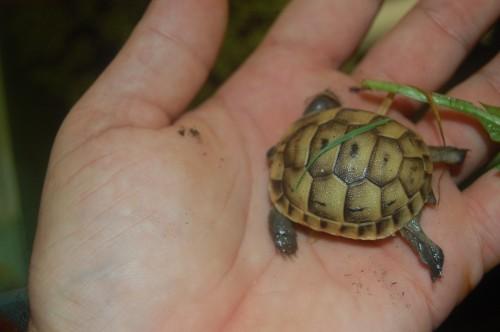 identification des tortue  510