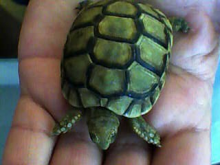 identification des tortue  611