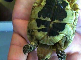 identification des tortue  810