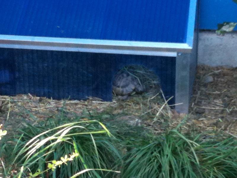 hibernation  serre  Img_0231