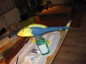 LAMA - Aerographe et peinture Acrylics Appl_g10