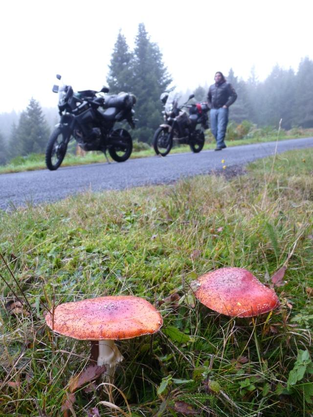 Vos plus belles photos de moto P1080110
