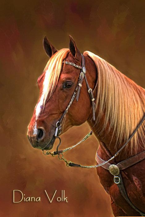 Les beaux dessins de chevaux - Page 2 29240_10