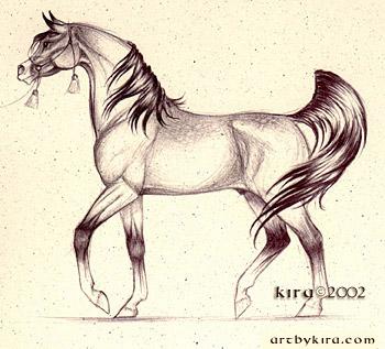 Les beaux dessins de chevaux - Page 2 Arabe10