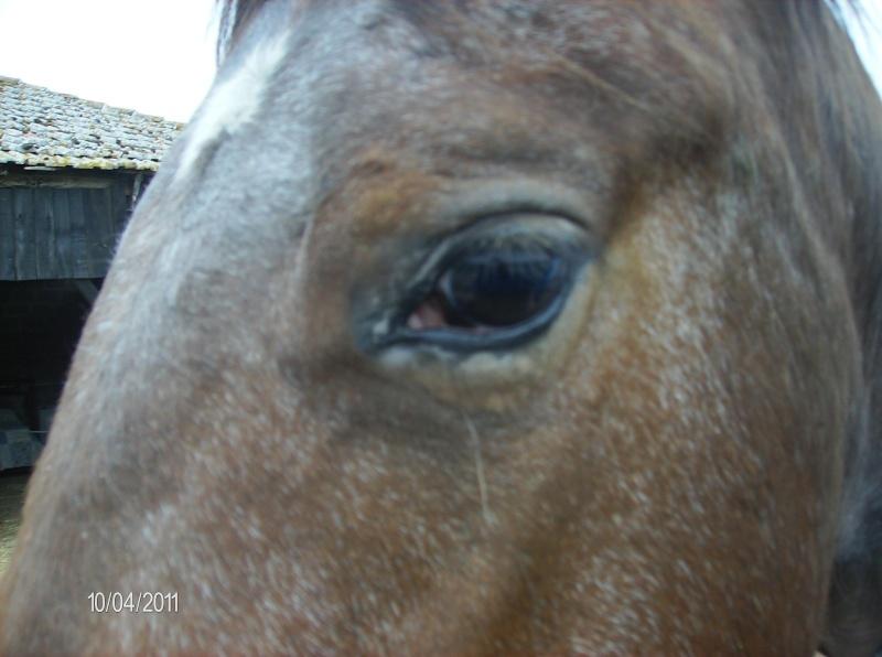 CONCOURS PHOTOS, L'oeil des chevaux ! - Page 2 Uppy_210