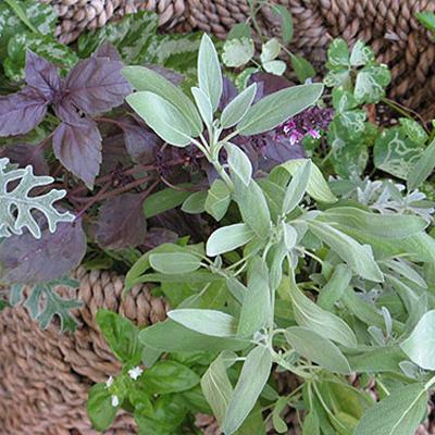 Βότανα και αδυνάτισμα Herbs10