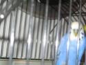 Mes perruches: Noisette et Océan Img_4523
