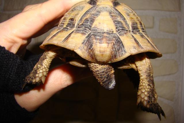 tortues de laetitia7 Dsc01020
