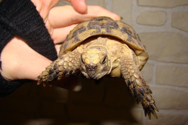 tortues de laetitia7 Dsc01021