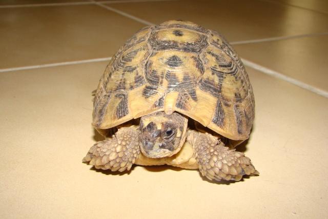 tortues de laetitia7 Dsc01022